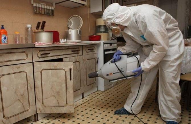 Рецепты народных средств от клопов в домашних условиях: эфирные масла, борная кислота, скипидар и керосин