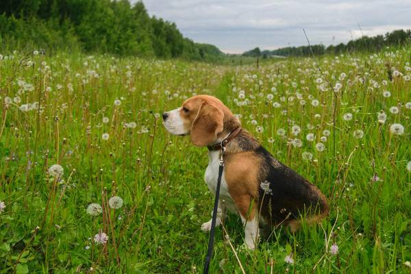 Что делать, если собаку покусали комары и мошки