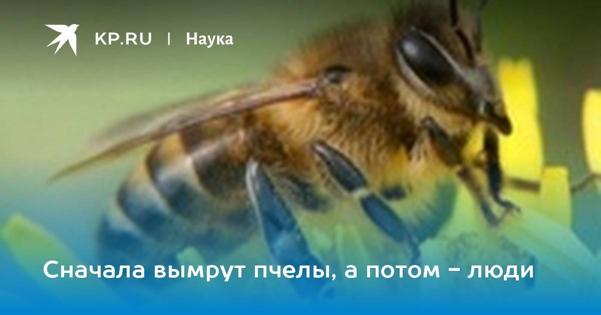 Пестициды вызывают ненормальный рост мозга у пчел