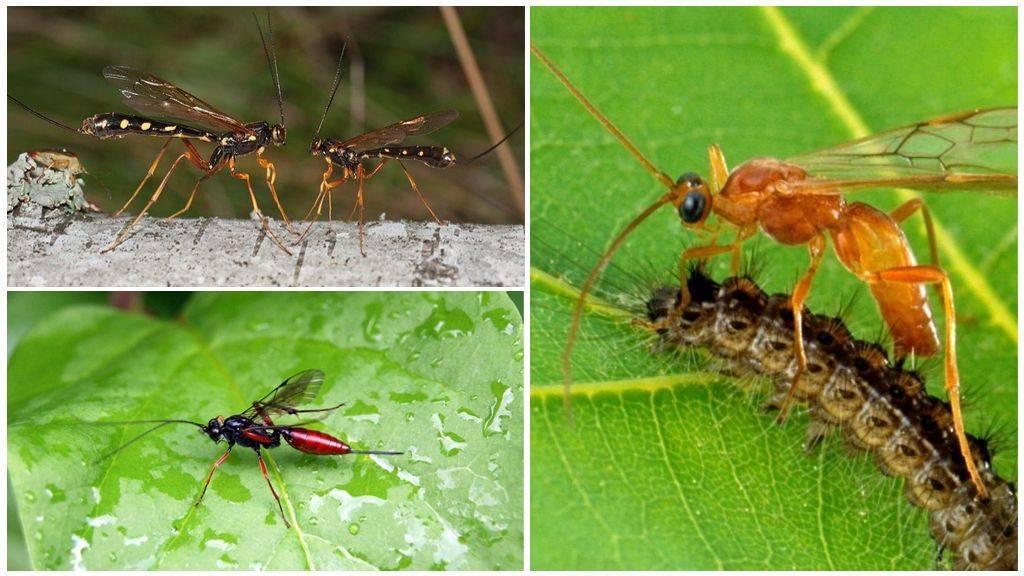Огромные осы на участке — союзникиили смертельная угроза?