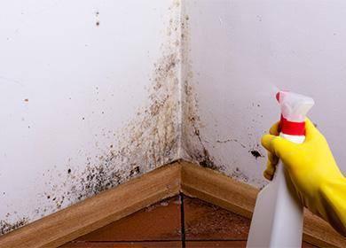 Плесень на стенах в квартире что делать, современные методы уничтожения