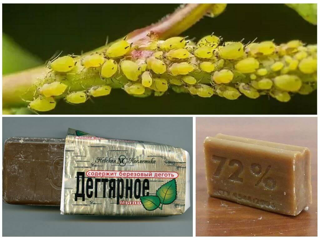 Дегтярное мыло против огородных вредителей