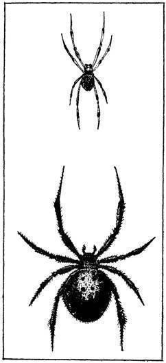 Как вывести и откуда берутся пауки в доме – способы попадания в дом и методы борьбы