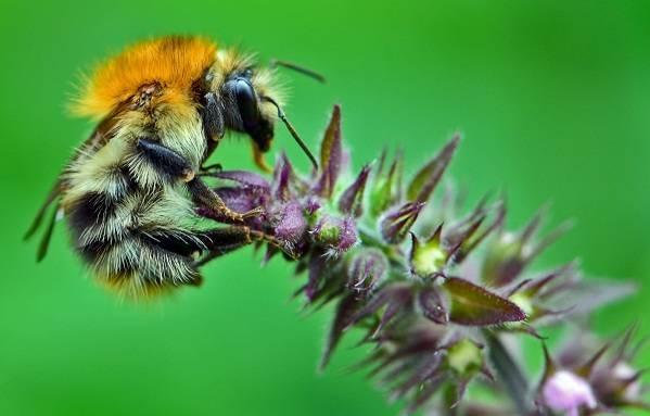 Многообразие мира пчел