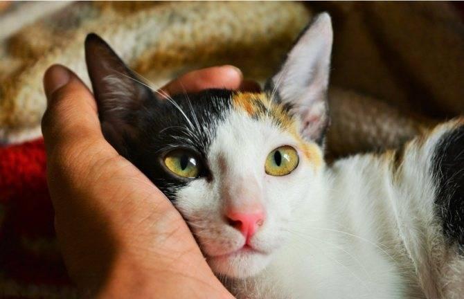 Выводим блох у кошки в домашних условиях: избавляемся от блох при помощи подручных средств