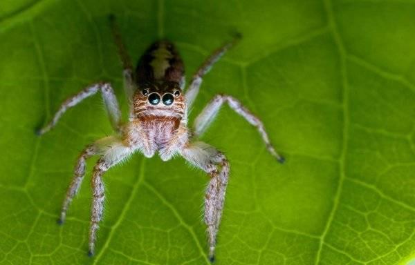 Ноги паукообразных