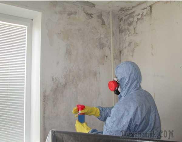 Как вывести грибок и плесень со стен квартиры или дома