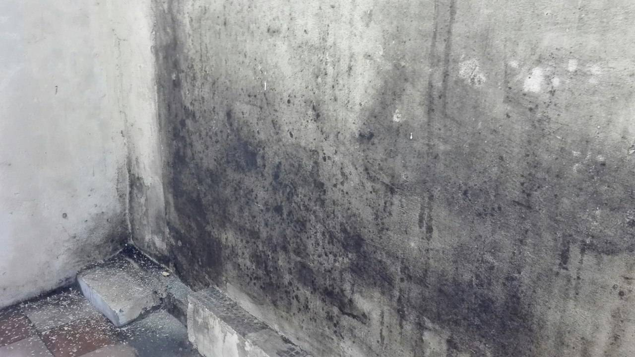 Как убрать плесень со стен и предотвратить её повторное появление