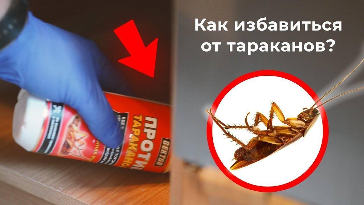 Профессиональные средства от тараканов – чем травят насекомых дезинсекторы