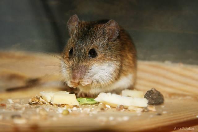 Какой утеплитель не едят мыши