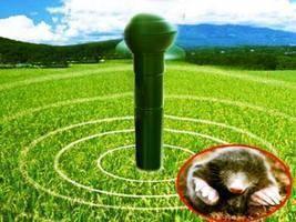 Как избавиться от кротов на участке. советы опытного фермера