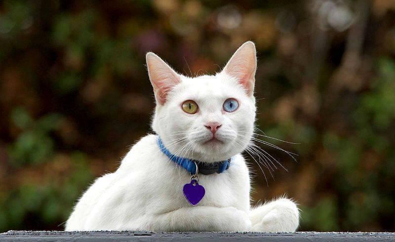 Барс от клещей для собак и кошек