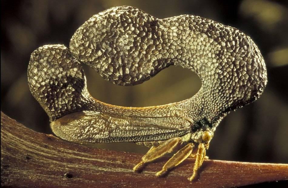 Гигантская сколопендра – опасность из тропических лесов