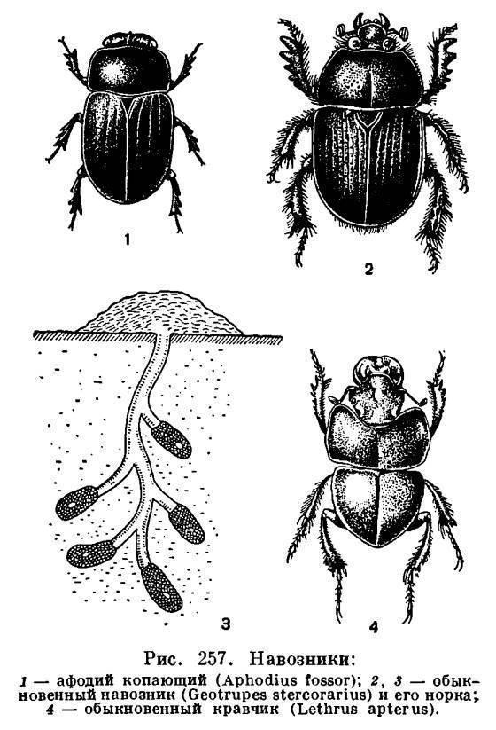Чем опасен луговой мотылек