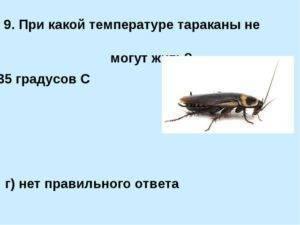 При какой температуре погибают тараканы?