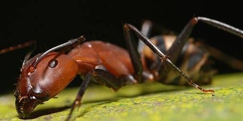 Что означает если приснились муравьи. народные поверья и современные сонники расскажут, к чему снятся муравьи