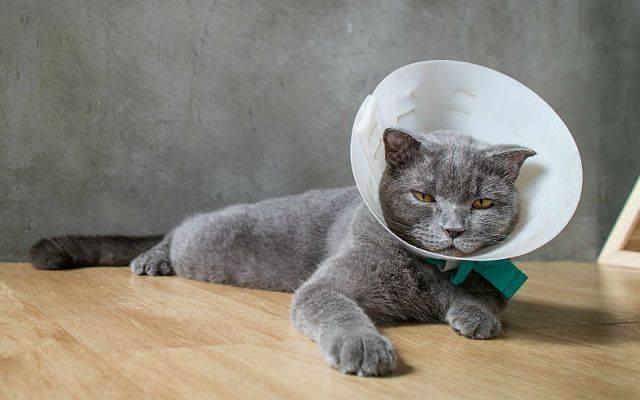 Опасность кошачьих зубов и последствия их укусов