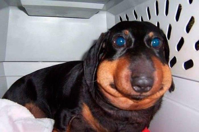 Что делать, если собаку укусила оса: первая помощь для домашнего питомца