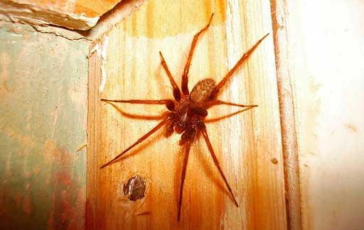 Нападение тарантула