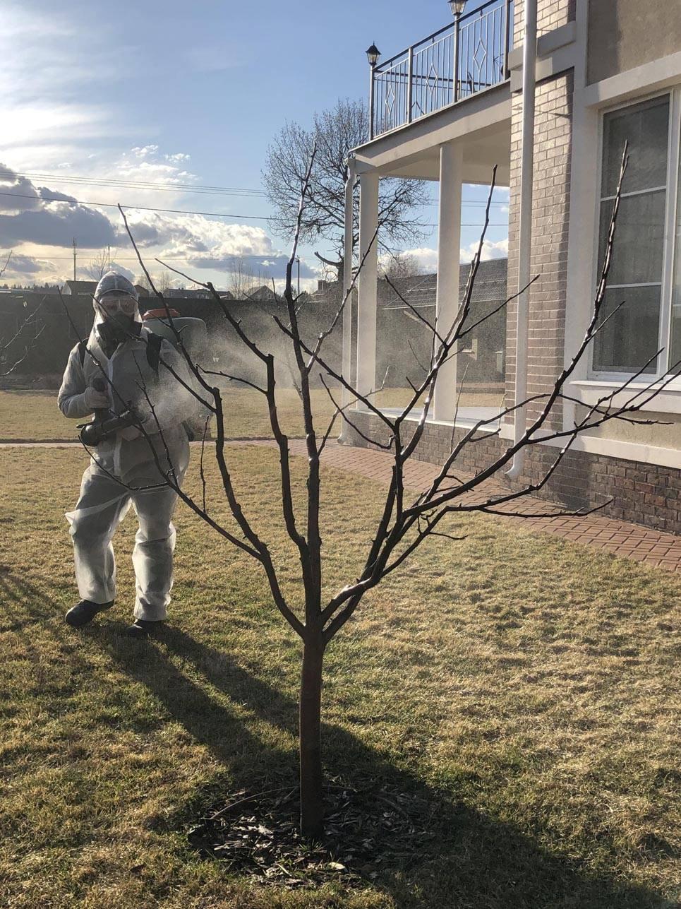 Как бороться с паутинным клещом на яблоне