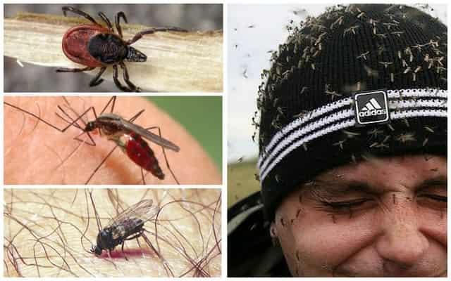 Самые эффективные средства от комаров