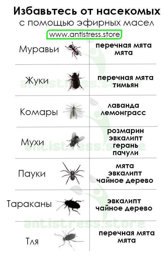 Эфирные масла помогающие избавиться от комаров и насекомых