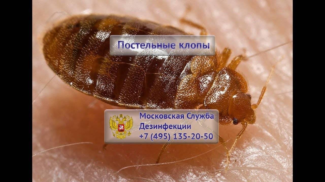 Уничтожение клопов в Москве с гарантией: обзор служб