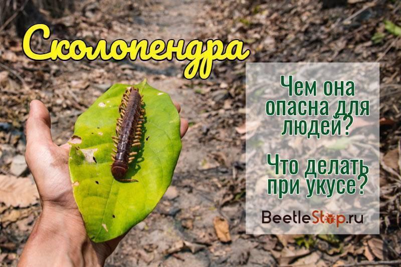 Применение гербицида «стомп профессионал», как бороться с сорными растениями