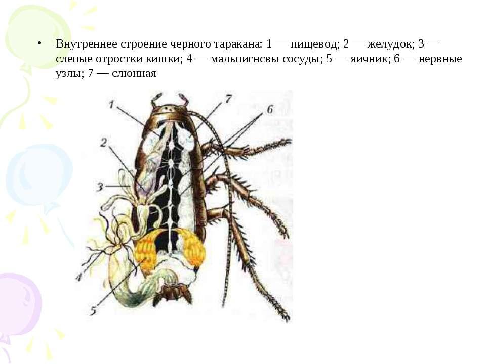 Яйца тараканов должны быть уничтожены все до одного, только так можно победить этого паразита