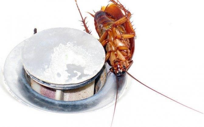 Как травить нашатырным спиртом тараканов: рецепт приготовления раствора