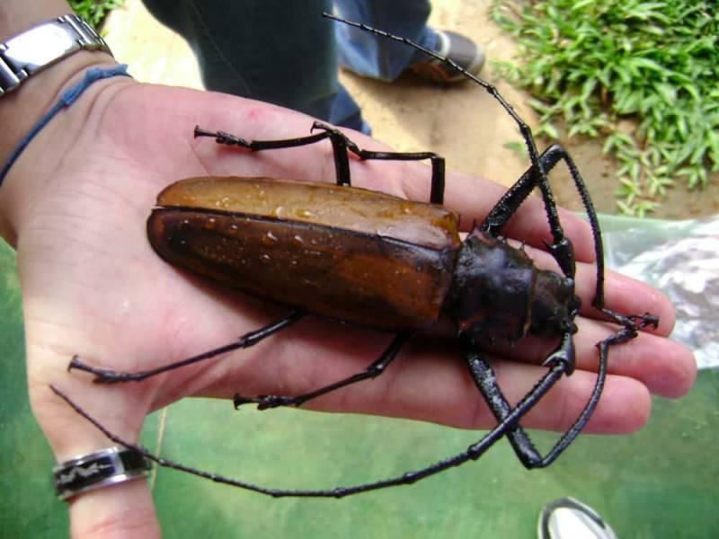 К чему снятся черные жуки много