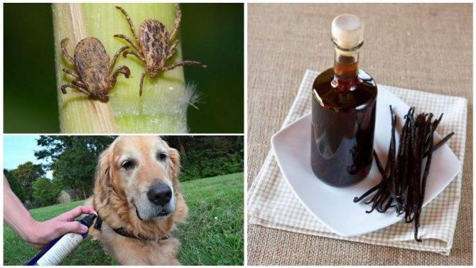 Как правильно выбрать хороший шампунь от блох и клещей для своей собаки?