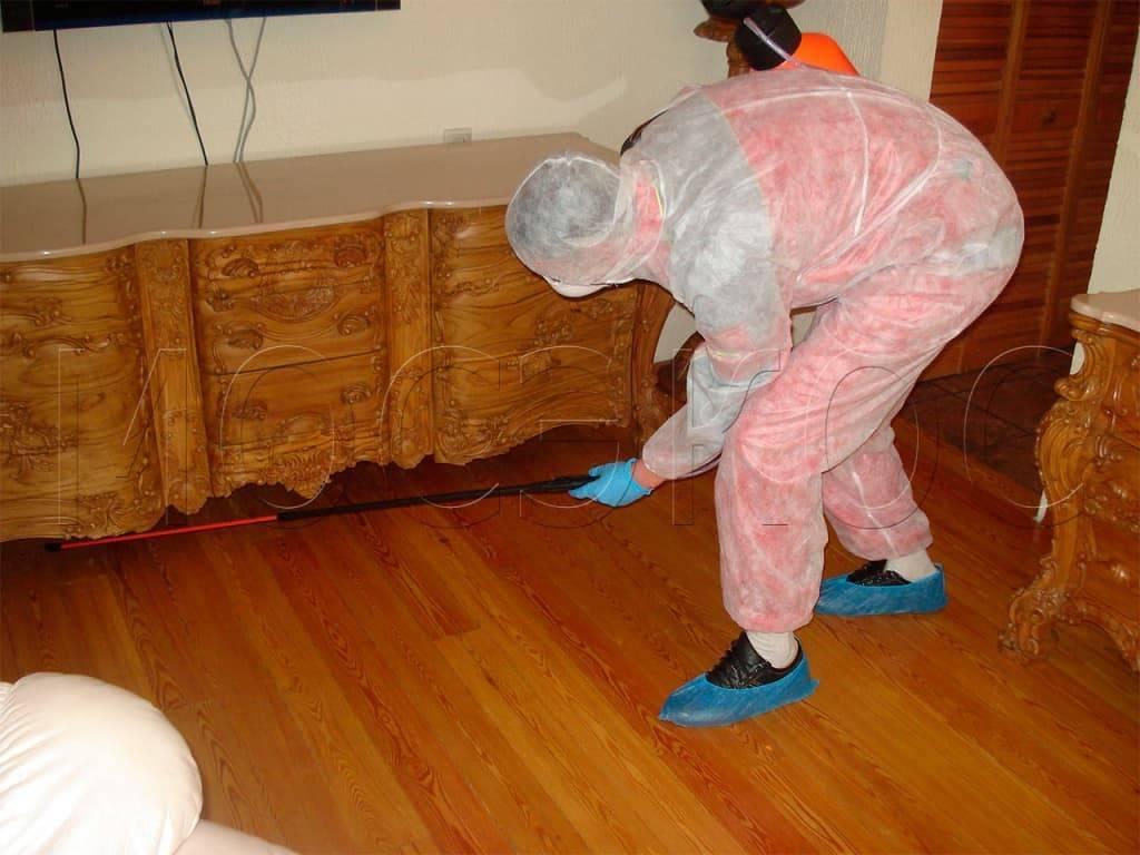 Можно ли окончательно и навсегда вывести из квартиры клопов пароочистителем?