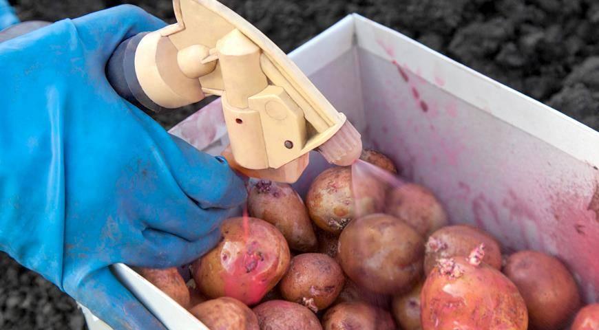 Протравитель престиж для обработки картофеля: инструкция по применению, отзывы