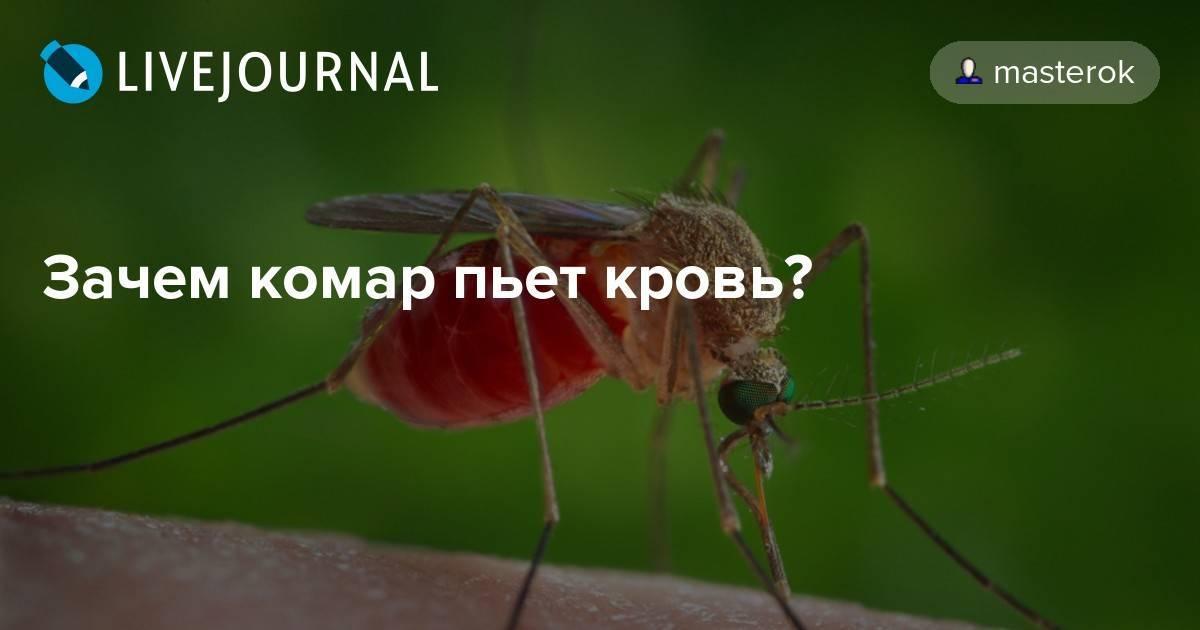 Почему комары пьют кровь