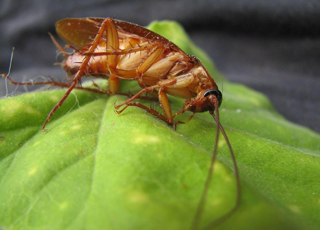 Чем опасны тараканы: может ли маленькое насекомое принести большие проблемы?