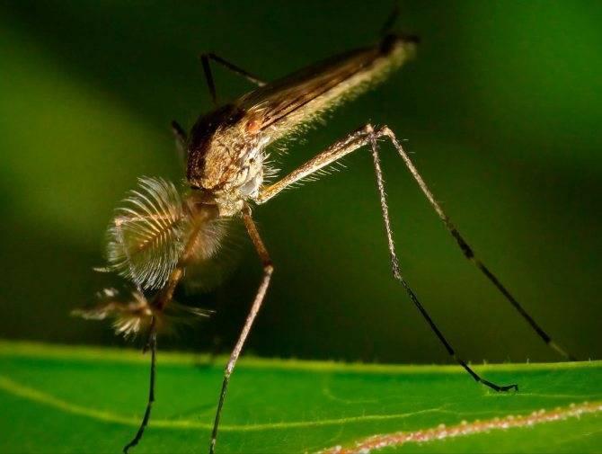Снимаем зуд от укусов комаров у детей в домашних условиях