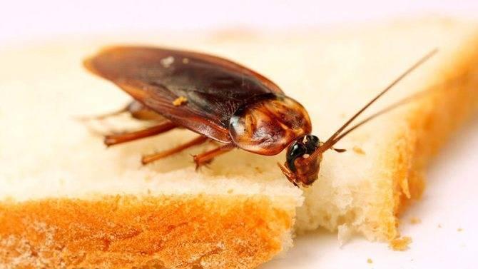 Какое животное ест тараканов
