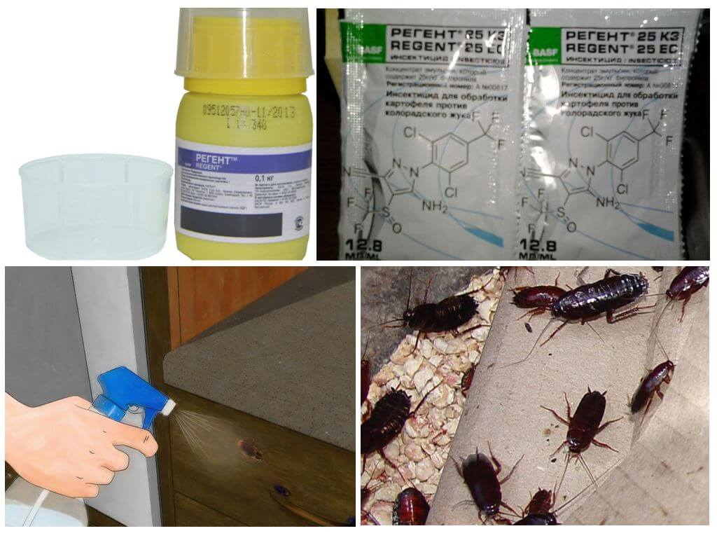 Эффективное средство от тараканов – препарат регент