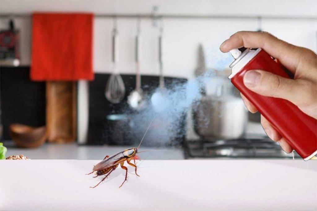 От чего заводятся тараканы и как они проникают в помещение