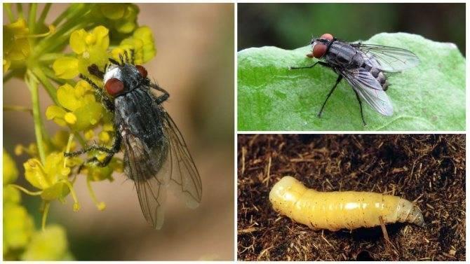 Как избавиться от мясных мух: аэрозоли и фумигаторы