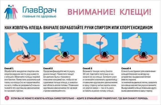 Чего бояться клещи и как предотвратить их появление