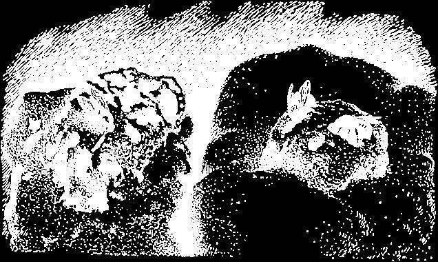 Толстун палласа – кузнечик, который разучился прыгать