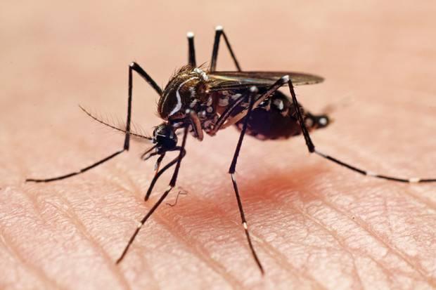 Магазинные и народные средства от укусов комаров