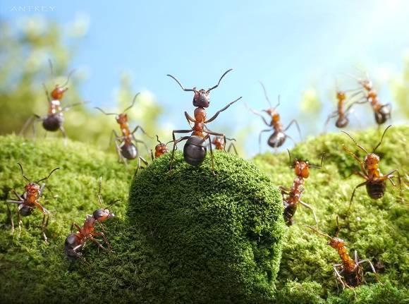 Как избавиться от муравьев на участке: эффективные методы борьбы