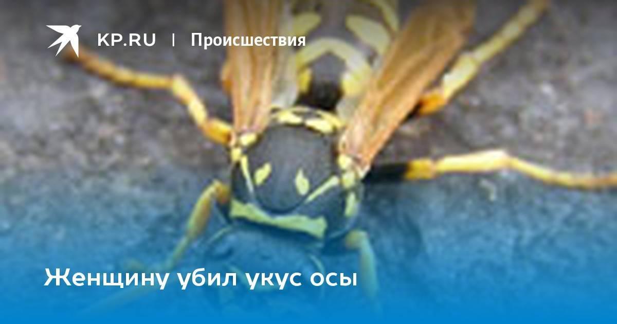 Главные признаки, как отличить осу от пчелы