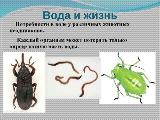 Жуки как отдельная группа насекомых: виды, строение, этапы развития