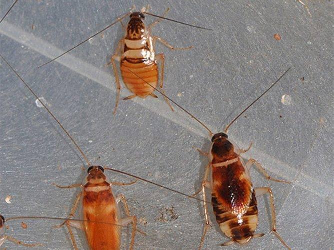 Температура смерти тараканов