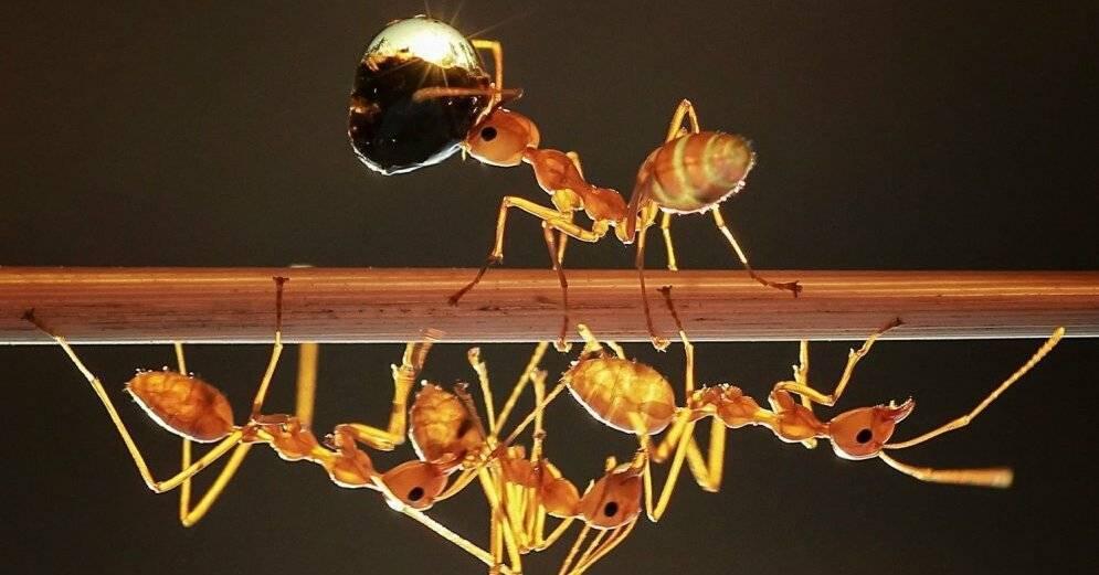 Средства борьбы с муравьями: плюсы и минусы