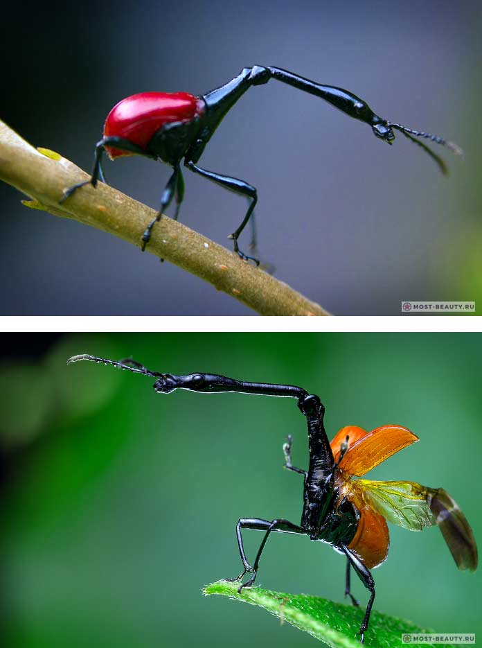 Жук долгоносик и его личинки